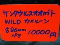20051207P1100349.jpg
