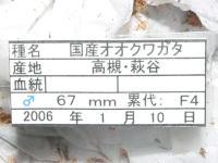 20060124P1130502.jpg