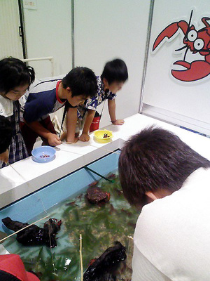 昆虫大陸2008(会場内3)